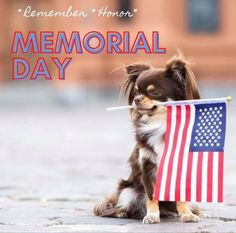 Memorial Day, Memories, Cats, Holiday, Red, Blue, Animals, Memoirs, Souvenirs