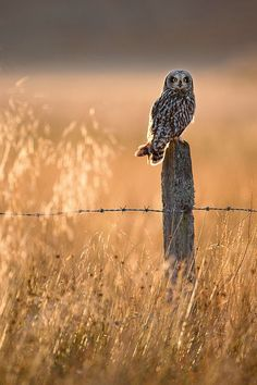 Wildlife photography made easy: simple secrets for getting close to animals   Digital Camera World