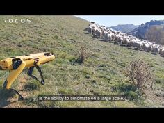 To prove just how useful Spot, Boston Dynamics' four-legged robot dog, can be, the New Zealand-based robotics company Rocos shared a video of Spot herding sheep