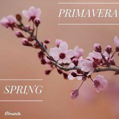 #flors #plantes #Catalunya #paíspetit #naturalesa  #flora #Maigl2016 #primavera #fotografia #flowers #plants  #Catalonia  #nature #spring #Mayl #instagood #macro #canon #photograph