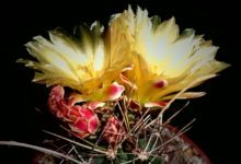 You searched for cactus - PlantsBank Barrel Cactus, Types Of Soil, House Plants, Perennials, Succulents, Berries, Seeds, Bloom, Flowers