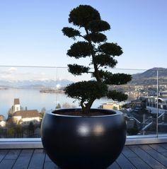 Baumschale, Aluminiumbaumschale Aluminium, Plants, Tree Structure, Garten, Planters, Plant, Planting