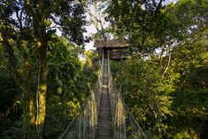 Inkaterra Canopy Treehouse. A treehouse perched at incredible heights in the middle of Peruvian South Eastern Amazon. The walkway 72 feet (22 meters) above the ground leading to the canopy is what makes it even more breathtaking. Located in...