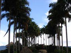 Panaca- Caldas, Colombia