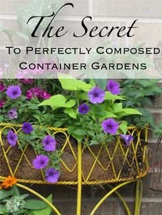 Find out everything you need to know to have the best looking planter and container gardens on the block!