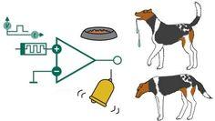 Cão de Pavlov eletrônico: computadores podem aprender