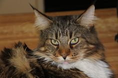 Baron by André Vosloo - Animals Other ( efs lens, camera flash, canon eos inside house, mid morning, ) Cat 2, Kitty, Day, Baron, Canon Eos, Pictures, Animals, Lens, House
