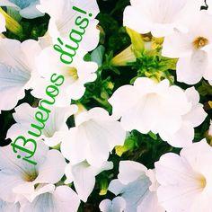 Cada vez más cerca del fin de semana ¡Feliz Jueves!  #ideassoneventos #blog #bloglovin #organizacióndeventos #comunicación #protocolo #imagenpersonal #bienestarybelleza #decoración #inspiración #bodas #buenosdías #goodmorning #jueves #thrusday #happy #happyday #felizdía #flores #flowers #blanco #white #freshflowers