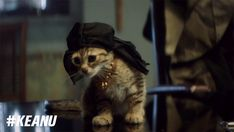 The Shocking Truth Behind Why Key & Peele's New Movie Features A Kitten Instead Of A Puppy