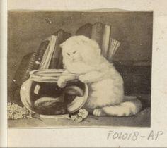 Anonymous | Fotoreproductie van (vermoedelijk) een schilderij met een kat bij een vissenkom, Anonymous, c. 1860 - c. 1870 | Onderdeel van Engels familiealbum met foto's van personen, reizen, cricket en kunstwerken.