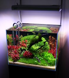 Lovely planted tank