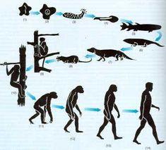 Fijismo, Creacionismo, Catastrofismo, Lamarckismo y Darwinismo | experimentemos Charles Darwin, Extinct Animals, Prehistoric Animals, Human Evolution Tree, Theory Of Life, Human Fossils, Darwin Theory, Theory Of Evolution, Early Humans