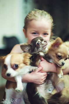 Happiness is....an arm full of Chihuahua's <3