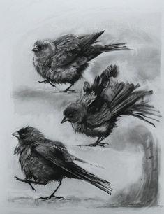 Little Bird Dance by Susie Gordon Charcoal ~ 17 x 14 Crow Art, Bird Art, Bird Drawings, Animal Drawings, Beautiful Drawings, Beautiful Artwork, Charcoal Art, Charcoal Drawings, Bird Sketch