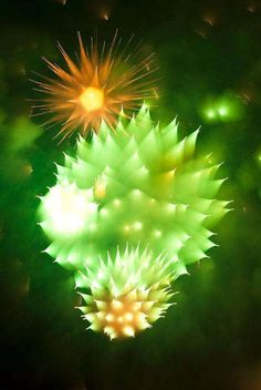 29.) A picture of fireworks, taken by a camera that refocused during the explosion.