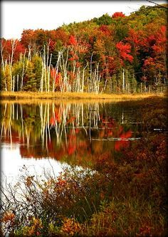 Council Lake, Hiawatha National Forest, Munising, Michigan. Photo by Debby Oliver. Love this crisp autumn scene