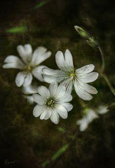 Buen martes con flores blancas