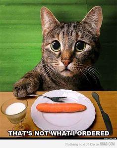 Sad Cat :(