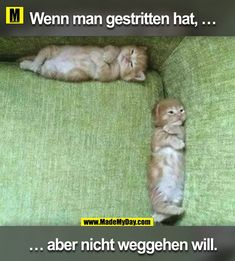 They look like they had a fight :( (i.it) submitted by Zed_Elyas to /r/kittens 0 comments original - - Cute Kittens - LOL Memes - in Clothes - Kitty Breeds - Sweet Animal Pictures by Visualinspo Cute Kittens, Cats And Kittens, Kitty Cats, Funny Kitties, Orange Kittens, Ragdoll Kittens, Tabby Cats, Bengal Cats, Baby Kittens