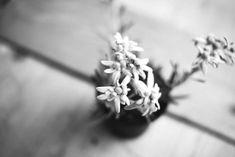 Booking.com: Skihotel Galzig , Sankt Anton am Arlberg, Österreich - 158 Gästebewertungen . Buchen Sie jetzt Ihr Hotel! Dandelion, Flowers, Plants, Dandelions, Plant, Taraxacum Officinale, Royal Icing Flowers, Flower