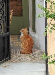 cats greece - Google Search