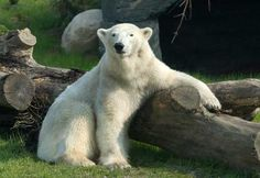 Columbus Zoo, Ohio.  Enjoyed the polar bear exhibit and the Islands of Southeast Asia boat ride with the kids.