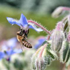 Bienen und Insekten schützen: So wird der Garten insektenfreundlich — Parzelle94.de