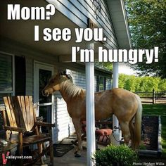 This is so funny! I love this - Horses Funny - Funny Horse Meme - - This is so funny! I love this The post This is so funny! I love this appeared first on Gag Dad. Funny Horse Memes, Funny Horse Pictures, Funny Horses, Cute Horses, Pretty Horses, Beautiful Horses, Horse Humor, Funny Memes, Baby Horses