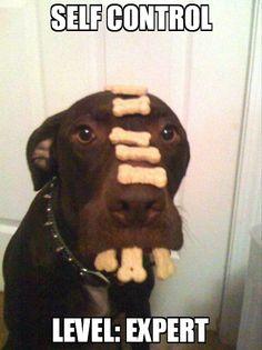 Good Dog @Robert Kurtz!!! hahaha... I wanna see you do this with Kuma when I come at Christmas this year! :)