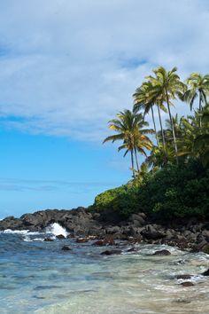 """turtle beach"" North Shore, Oahu, Hawaii"