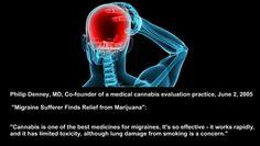 Cannabis and Migraines   #marijuana #cannabis #cbd #weed #thc #migraines #health #medical #pain #medicine