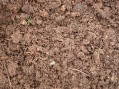 Garden Soil The Importance Of Soil For An Organic Garden A successful organic garden is dependent upon the quality of the soil This article has ideas to help you provide. Benefits Of Organic Food, Organic Soil, Grow Organic, Organic Gardening Tips, Organic Fertilizer, Organic Fruit, Organic Pesticides, Vegetable Gardening, Leaf Beetle