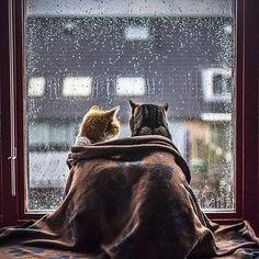 Вдвоём хорошо в любую погоду