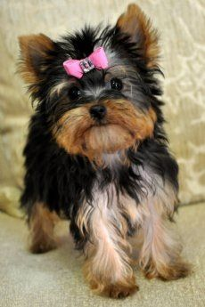 I WILL have this dog one day!