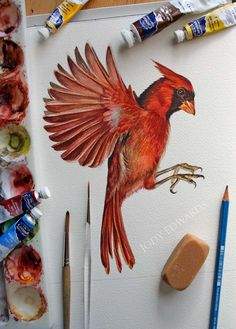 Original Watercolor painting of a Cardinal by Jody Edwards
