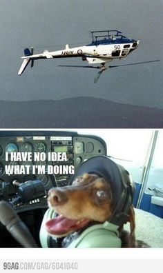 Funny pictures about Flying a helicopter. Oh, and cool pics about Flying a helicopter. Also, Flying a helicopter photos. Funny Animal Pictures, Dog Pictures, Funny Photos, Funny Animals, Animal Funnies, Bizarre Photos, Funny Shit, Funny Cute, The Funny
