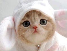 Squee Alert! Kitten in a bunny suit!!!