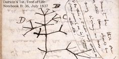 Over 16,000 of Darwin's Papers On Evolution Are Now Available Online Carl Sagan, Cosmos, Connected Life, Origin Of Species, Life Sketch, Evolutionary Biology, Theory Of Evolution, Science Articles, Texts