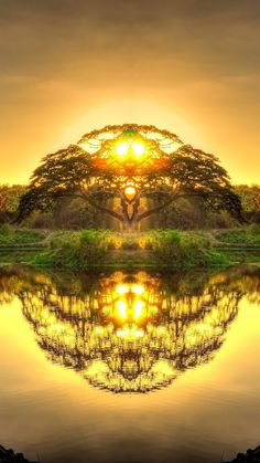 Double reflection in Paradise