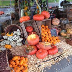 #baldisthalloween #halloween #pumpkins #kürbis #Herbst #autumn #emmental #ämmital #Europe #switzerland #germany by wander___woman Emmental, Shots, Pumpkin, Drink, Vegetables, Halloween, Eat, Instagram Posts, Food