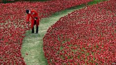 Beautiful: 888,246 ceramic poppies by artist Paul Cummins at the Tower of London, to mark the centenary of WWI #art #beauty #memorial