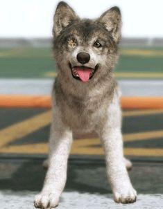 DD puppy