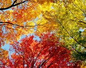 Under The Trees And Looking Up - A 10x20 Panoramic Landscape Fine Art Photography Print