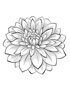 1 Dahlias To Print U0026 Color, From The Gallery : Flowers And Vegetation