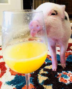 "Mini pig ""Jolene"" being silly"