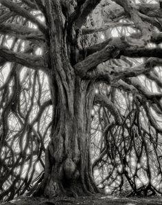 Beth Moon: la fotografa innamorata degli alberi secolari