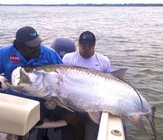 Possible world record fly-caught tarpon #Tarpon #fishing - Seatech Marine Products / Daily Watermakers