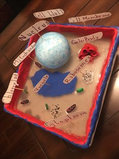 model of a plant cell Plant Cell Project, Cell Model Project, Animal Cell Project, Science For Kids, Science Activities, Science Experiments, Science Fair Projects, School Projects, 3d Plant Cell Model