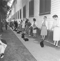 """Los Angeles: Casting call for black cats to star in """"The Black Cat"""" 1961"""