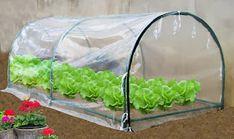 invernadero casero Vegetable Garden, Interior Decorating, Landscaping, Stage, Outdoors, Gardening, Motivation, Iphone, Flowers